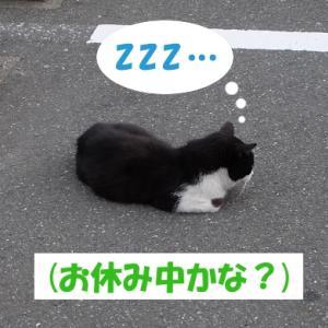 梅雨の日に、街の猫くんが欲しい物②