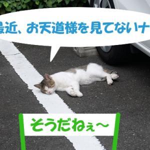 お天道様に会えないと嘆く街の猫くん