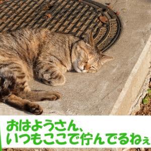 街の猫くんの、いつもの光景 (シーンその①)