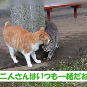 街の猫くんの、いつもの光景 (シーンその②)