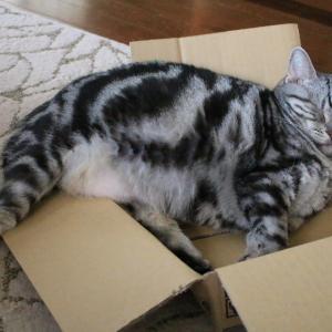 もう箱型じゃない。