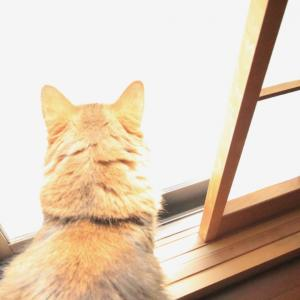 猫的くつろぎ角度