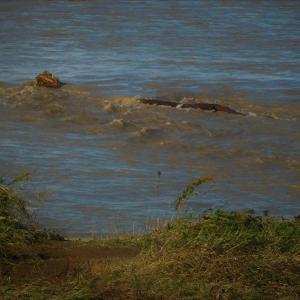 土手まで水 一部冠水 水の脅威@多摩川 台風19号の爪痕①