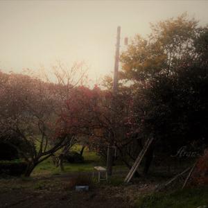 里山に桜が咲いてる・・・?