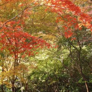 武蔵野の古刹・深大寺で紅葉狩り