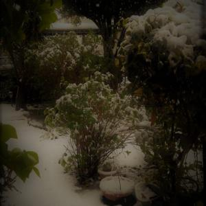 東京 雪のおかげで外出自粛!