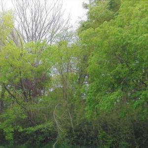 雨が新緑を育てる・春先の和語になごむ