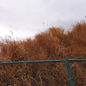あたたかな枯草、冷たい雪の野 スケッチ