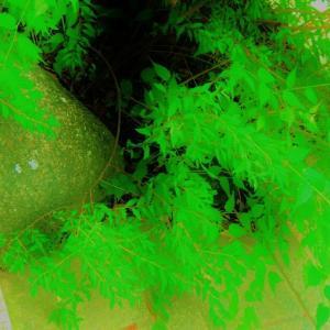 緑が染みる石・・・