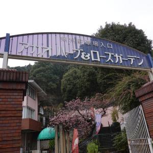 熱海桜と梅(2019年2月)