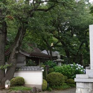 川崎のあじさい寺「妙楽寺」の紫陽花