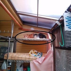 黒猫さん診察同行~ママ振りのかぶり直しの予定が・・・