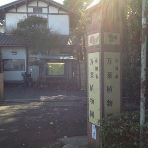 秋の市川市万葉植物園お一人様散策~十月桜も満開~