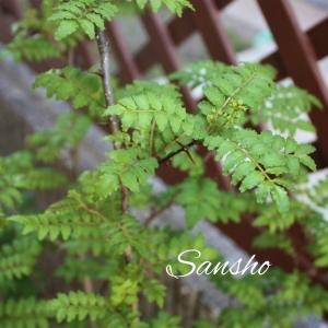 木の芽の季節