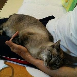 膝乗り猫の季節
