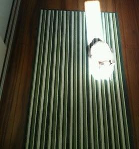 陽だまり確保猫