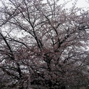 3月終わりの雪  今日はまさに休日