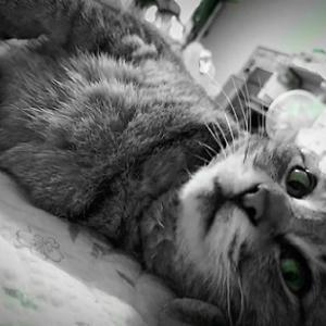 ワタシが猫動画でYouTubeデビューできない訳。