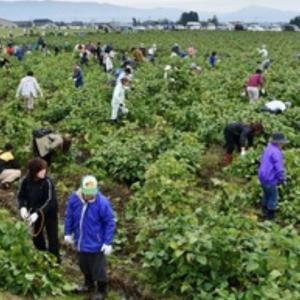 丹波黒大豆枝豆 収穫祭