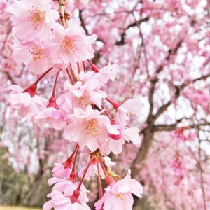 桜だけじゃない、花見
