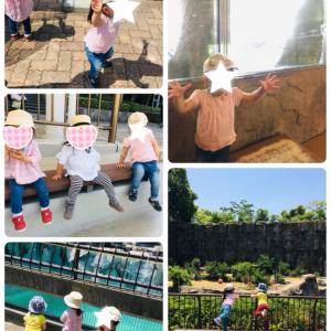 動物園と幼稚園の広場