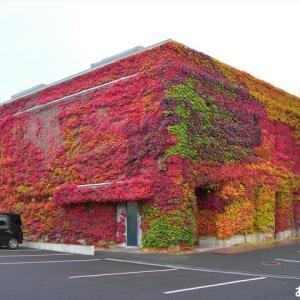 「六花亭」の紅葉です ♪