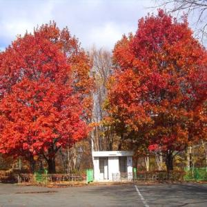紅葉に囲まれたトイレです ♪
