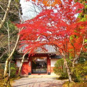 吉野門の紅葉 ♪