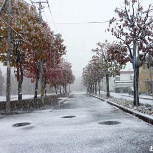 「初雪」が 降りました ♪