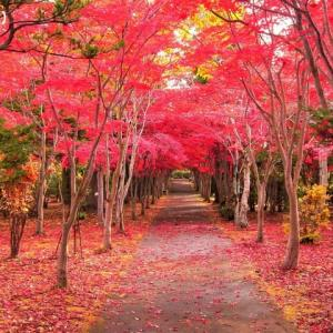 北海道の紅葉 第9弾 「樹芸センター」です ♪