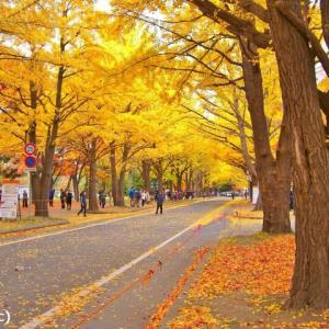 北海道の紅葉 第10弾 「北海道大学」です ♪