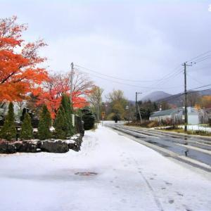 寒い「雪景色」を撮りました (泣く)
