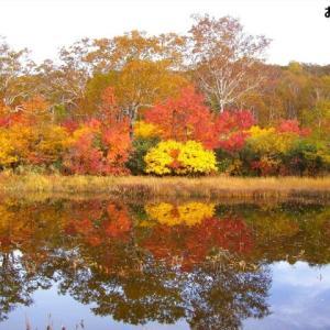 北海道の紅葉 第14弾 「神仙沼」です ♪