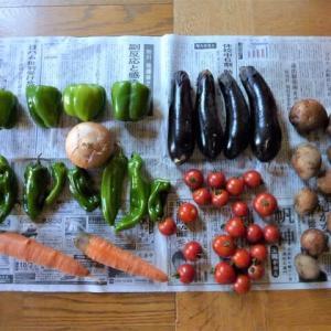 3番目の熟女さんから「不揃いの野菜」を頂きました ♪