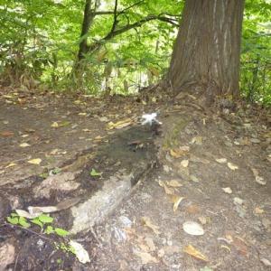 「森の妖精」が 写り込んだ !