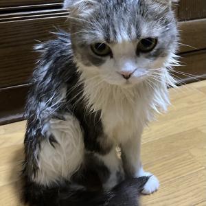 【Facebook情報】素晴らしいニュースです!!、おまけ~おもしろ猫シリーズ~