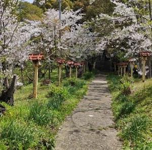 🌸今年の桜です🌸
