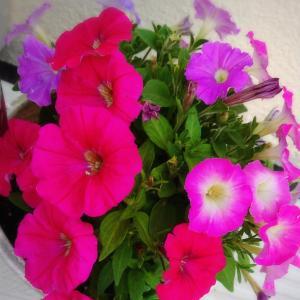 花を育てるとあなたの運氣は上がる↑↑↑