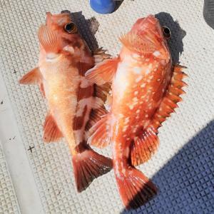 7魚種釣りましたが、何狙いだったのか。。「前編」