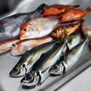 7魚種釣りましたが、、なんとか今年初の尺超えアジ「後編」