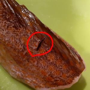キジハタ料理と寄生虫。