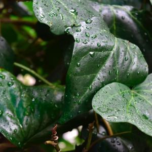 久しぶりの雨。