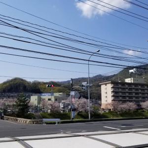 【スタッフ日記】桜が満開です(*´∇`*)☆安芸区トータルビューティーサロンTiary