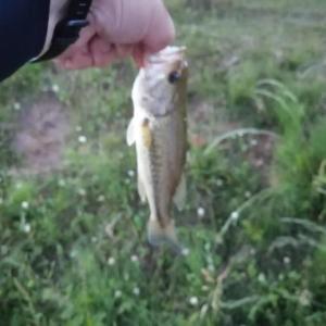 ダイエット[2161日目] 釣りに行ってきました