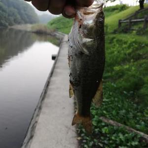 ダイエット[2224日目] 釣りから帰りました