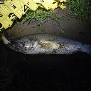 ダイエット[2267日目] 釣りに行ってきました