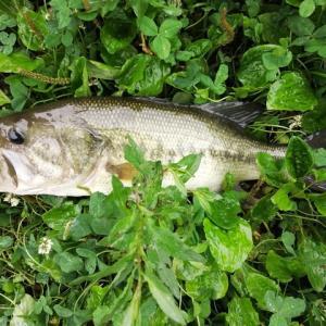 ダイエット[2511日目] 釣りに行って来ました