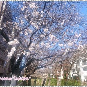 中目黒の桜*目黒川の桜*お天気良いので人が沢山*花見自粛だったような・・・