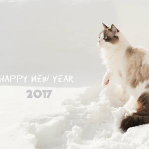 愛猫◆2017 元旦の雪上散歩