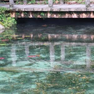 名もなき池「モネの池」